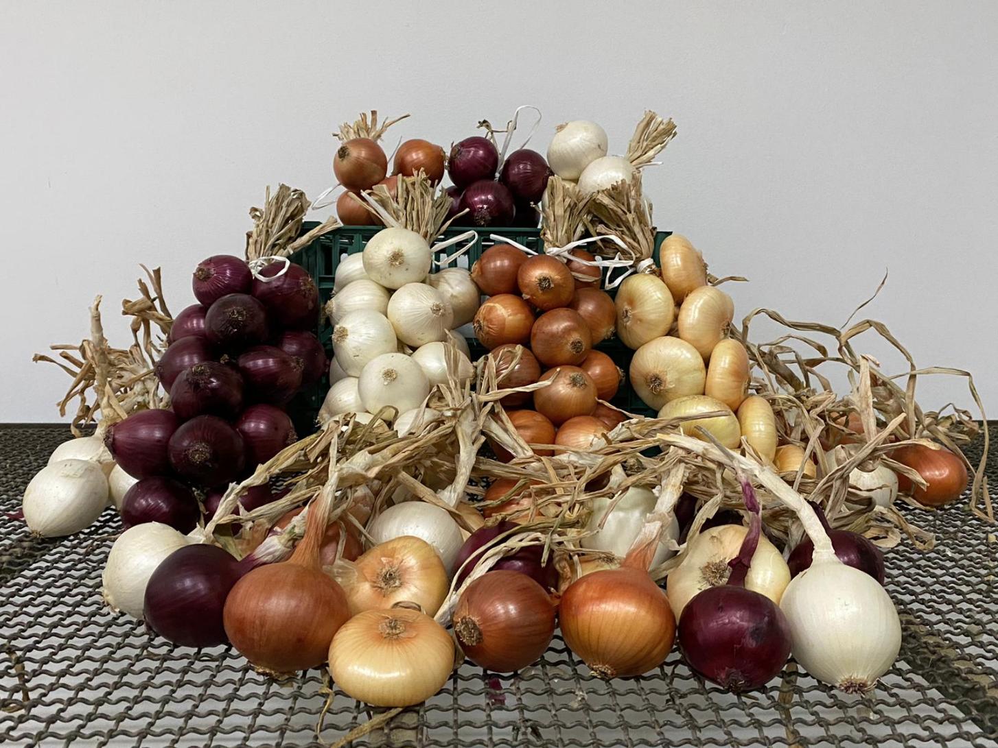 produzione-cipolle-di-cannarra.png